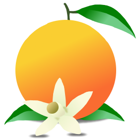 Graphic of an orange with one blossom